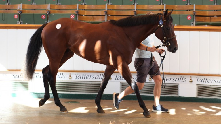 The Prince Of Lir colt out of Little Italy who was a good result for Micky Cleere