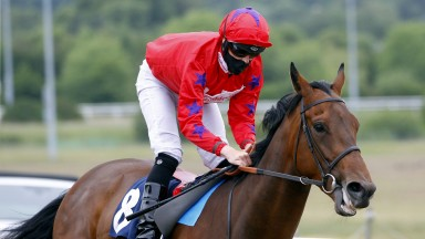 Australis: favourite for the Northumberland Plate at Newcastle