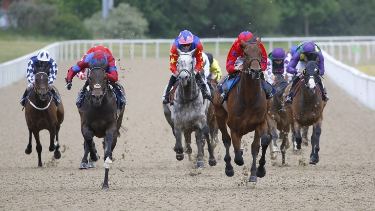 Australis (red) and Caravan Of Hope (blue and red): renew their rivalry in the Northumberland Plate