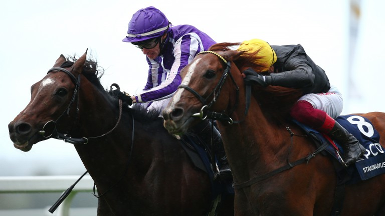 Pipped: Stradivarius (yellow cap) is just beaten by Kew Gardens in last year's Qipco British Champions Long Distance Cup