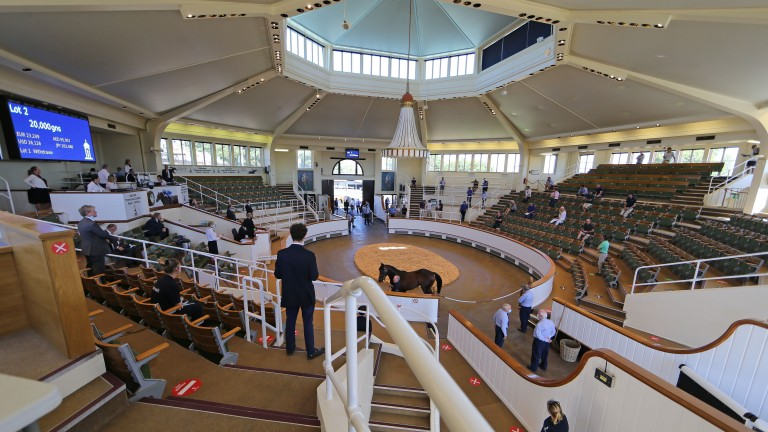 Buyers spread around the socially distanced Park Paddocks ring at the Tattersalls Craven Sale