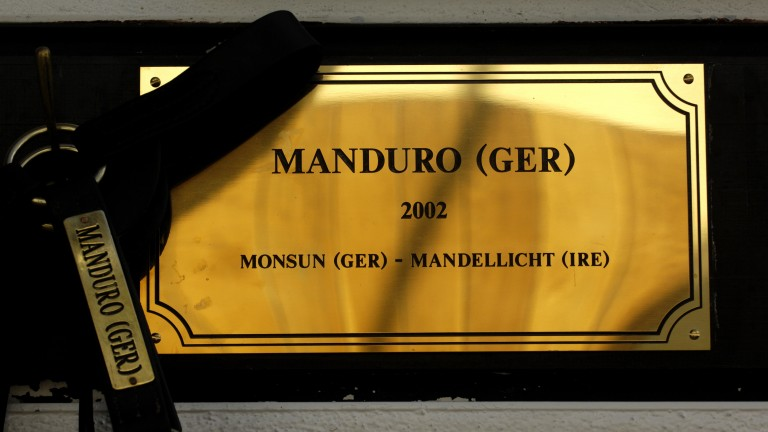 Manduro is the source of 35 stakes winners at stud