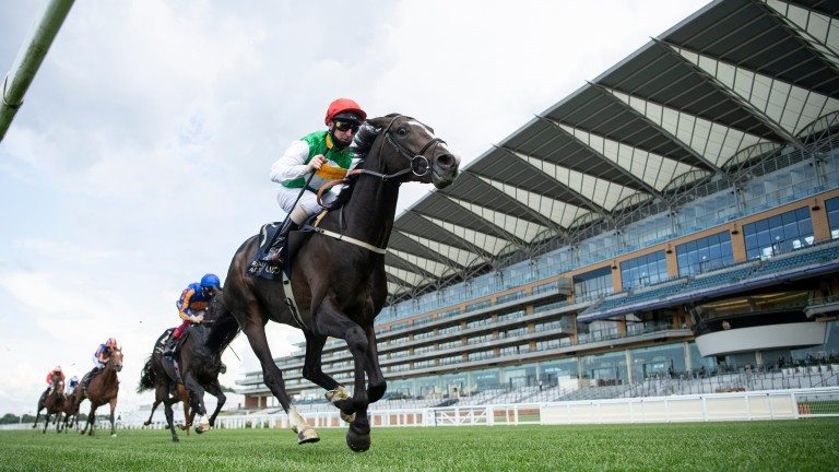 Pyledriver: will miss Saturday's Group 1 King George VI and Queen Elizabeth Qipco Stakes