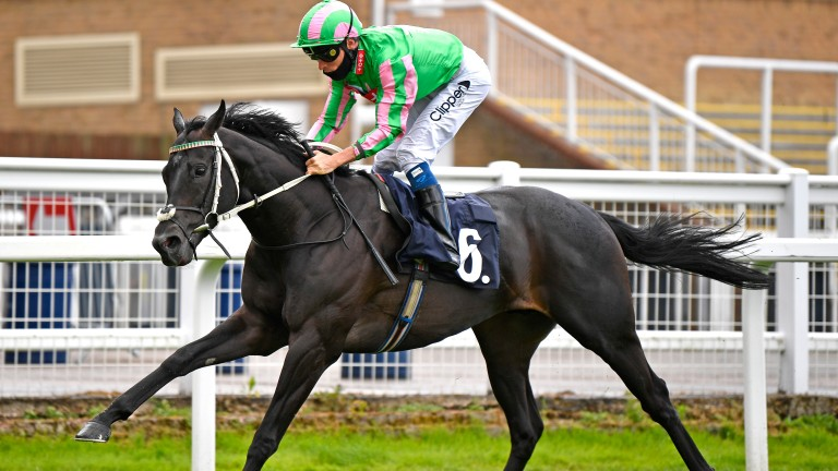 Pogo: Listed success at Windsor on his penultimate start