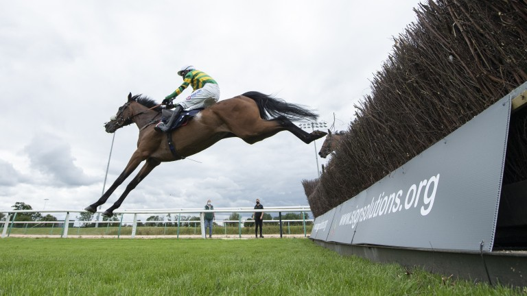 Southwell: high number of deaths at the course since jump racing resumed on July 1