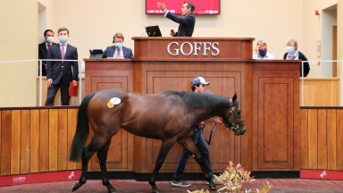 Lot 31: the Kingman colt out of Asaawir sells for £290,000