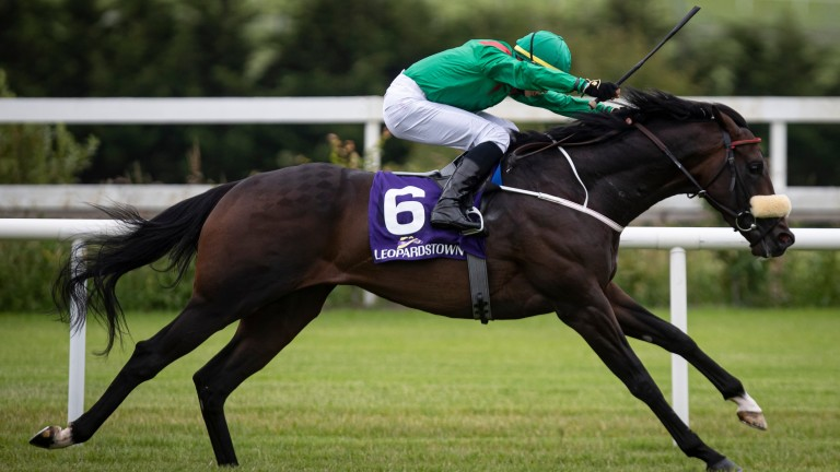 Sinawann: has form figures of 2123 at Leopardstown