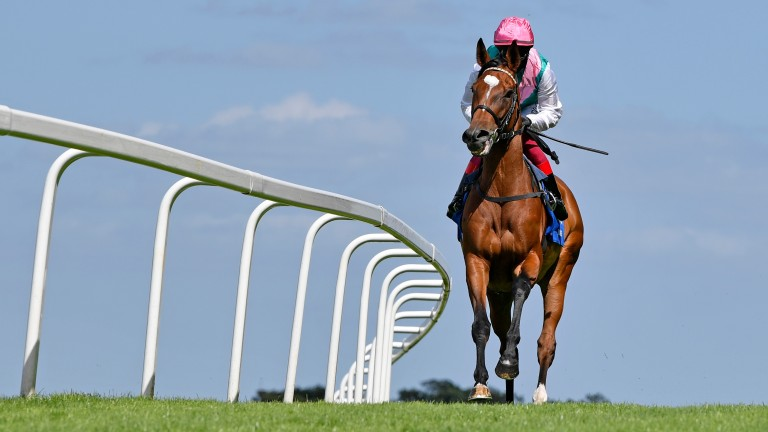 Enable: the jewel in the crown of Concentric's breeding career