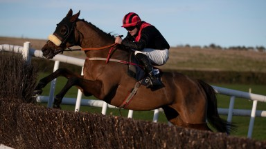 Peregrine Run: won the Grade 3 feature at Killarney last year