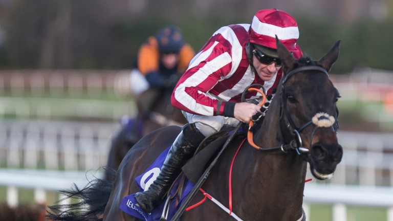 Paloma Blue: good second at Leopardstown in February