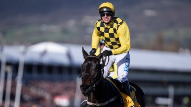 Al Boum Photo: back-to-back winner of the Cheltenham Gold Cup
