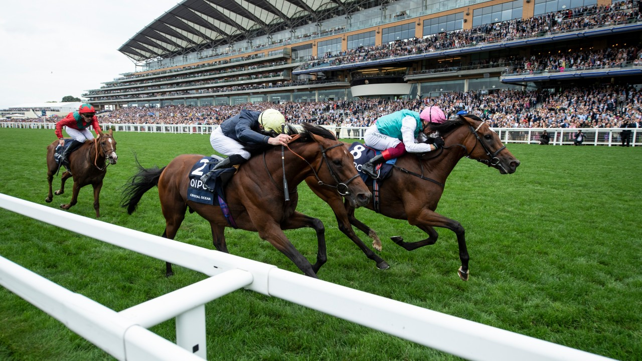 King george and queen elizabeth stakes 2021 betting trends mwsbetting