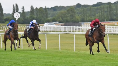 Darain (Oisin Murphy) proves far too good for runner-up Brilliant Light (left) and Winter Reprise on his racecourse debut at Newbury on Thursday