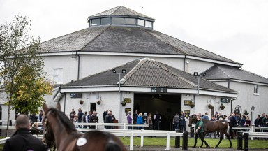 The Tattersalls Ireland sales ring in Ratoath, Fairyhouse