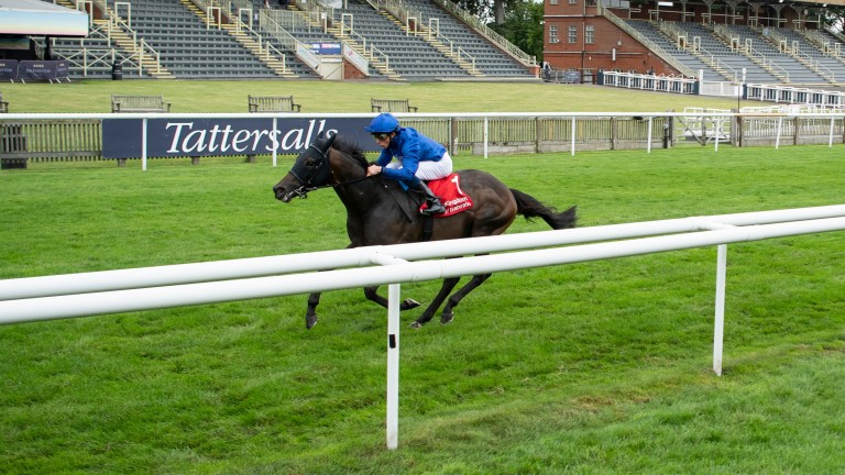 All on his own: Al Suhail runs away with the Sir Henry Cecil Stakes