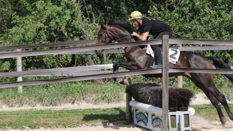 Showjumping and selling will be the order of the day in Becon-Les-Granits