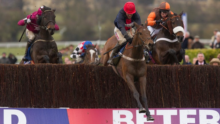 Bobs Worth (in front): winner of the 2013 Cheltenham Gold Cup