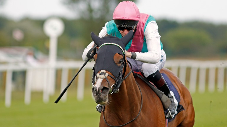 Portrush: closely related to the mighty Enable