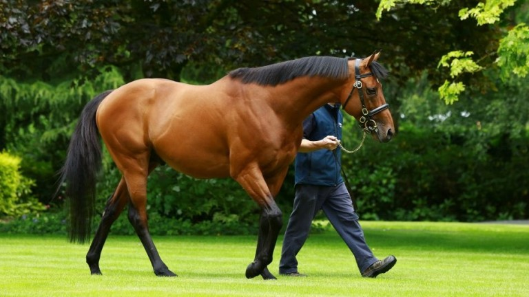 The Gurkha: Coolmore stallion and from a top-class family