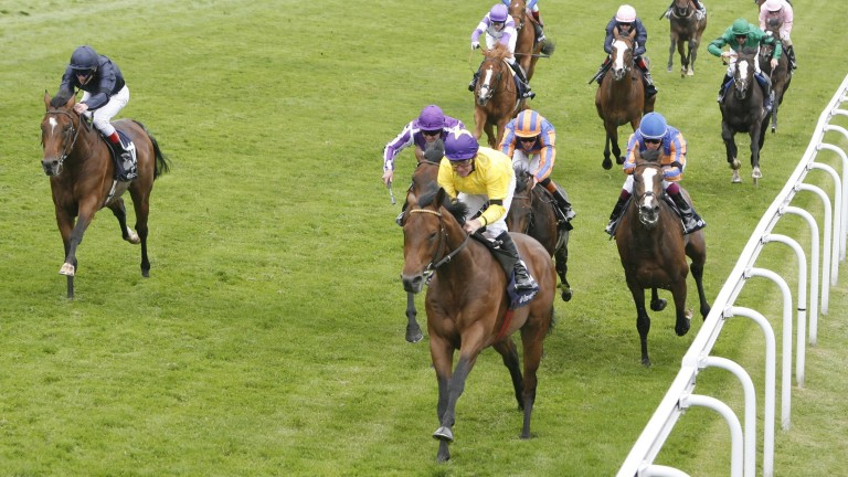 Sea The Stars: multiple Group 1 winner one of the all-time Flat greats
