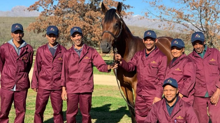The Cheveley Stud grooms pictured with their Futura yearling colt, who sold for R1.2 million