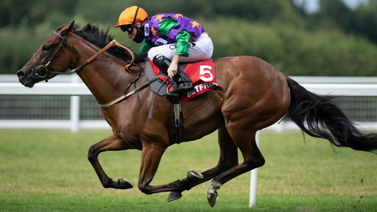 Lady Bowthorpe became Jarvis's first Group winner since 2008 in the Valiant Stakes at Ascot last year