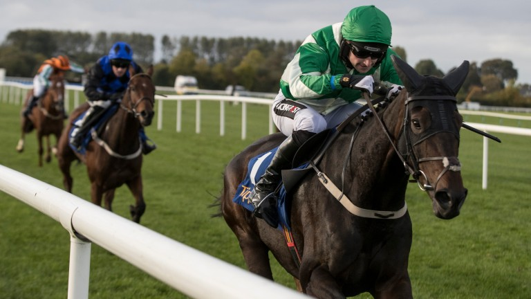 Royal Rendezvous: one of three at the head of the betting for the Galway Plate