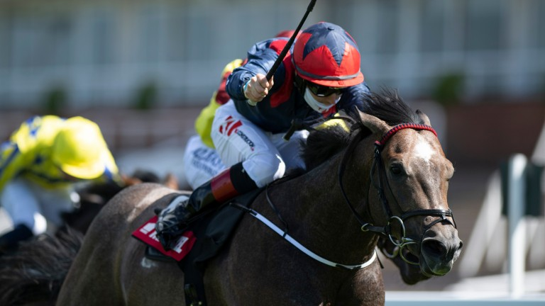 Steel Bull wins the Markel Insurance Molecomb Stakes