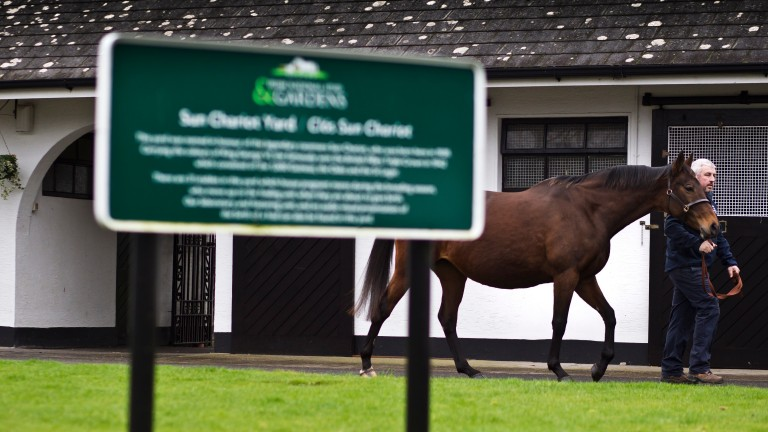 The Irish National Stud: overall group revenue held steady from 2018 to 2019
