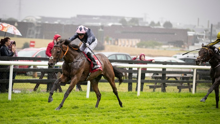 Laughifuwant: has proven himself in stakes company