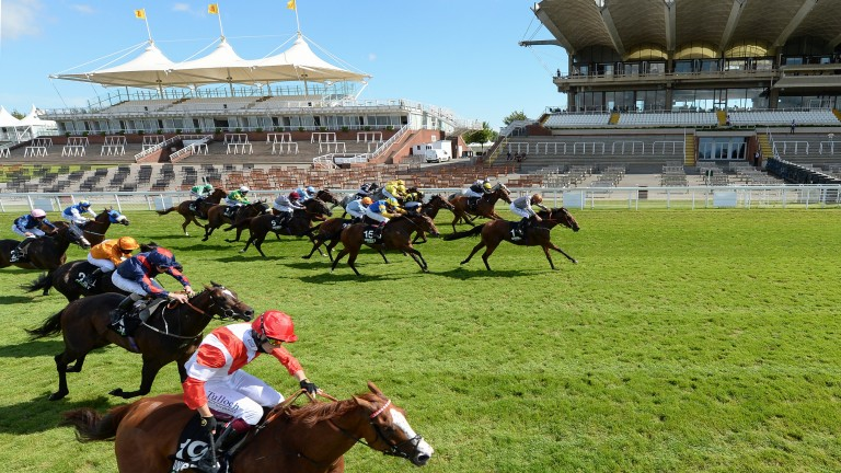 Summerghand: will come out of stall 17 again in Stewards' Cup