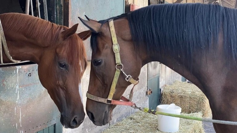Cirrus Des Aigles (right) and his niece Air De Valse spend plenty of time together