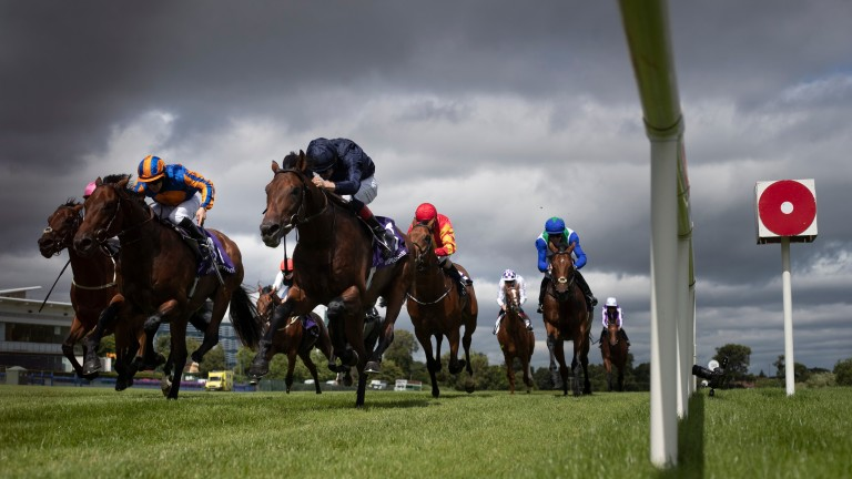 Military Style (navy) locks horns with Van Gogh (blue and gold) after the pair finished first and second in the Tyros Stakes earlier this month
