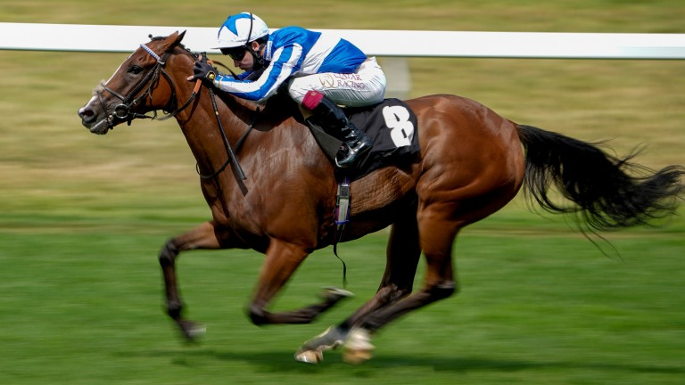 Chil Chil: Andrew Balding's Group 1 hope at Haydock