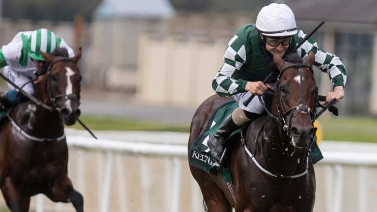 Lucky Vega: impressive winner of the Phoenix Stakes on Sunday