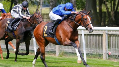 Dhahabi - half brother to Golden Horn