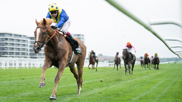 Dream Of Dreams: favourite for the Champions Sprint although has failed to fire at this meeting in the last two years