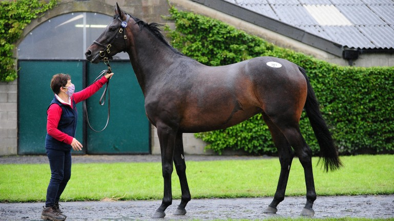 Altior's Walk In The Park half-sister made an impressive €300,000 to Gordon Elliot and Aidan 'Mouse' O'Ryan