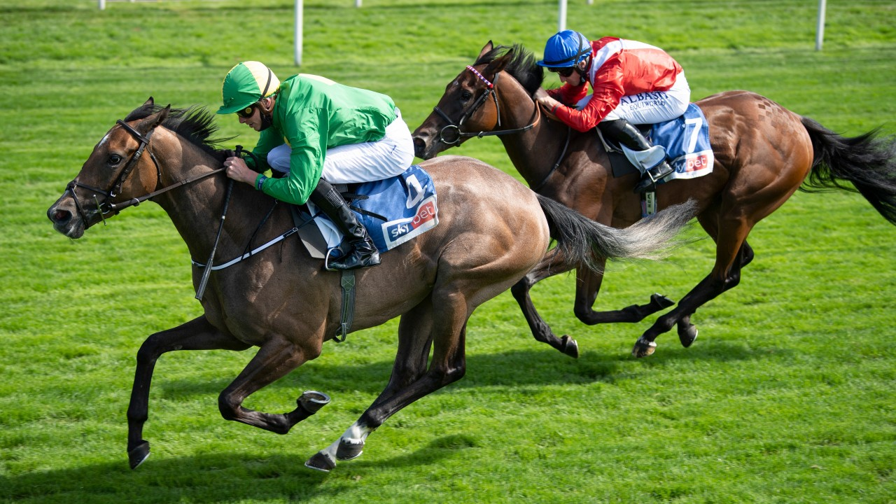 Condon lands Lowther as Miss Amulet denies Sacred in Knavesmire duel | Horse Racing News | Racing Post