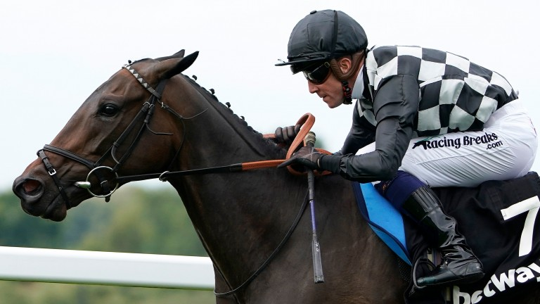 Lavender's Blue: top-rated runner in the Listed Snowdrop Fillies' Stakes