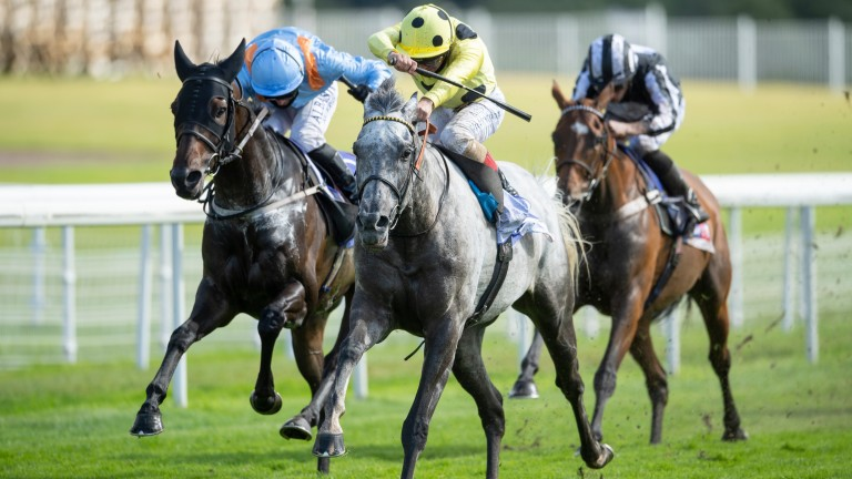 Fujaira Prince lands the Ebor and picks up 42.90 points in the Tote Ten To Follow competition for the 29 stables which selected him at the season's start