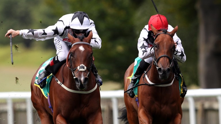 Dandalla (left) could be in action at Haydock