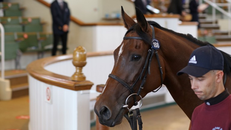 Cloud Drift exits the Tattersalls sales ring having been knocked down for 75,000gns