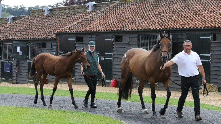 Mzyoon parades with her Exceed And Excel colt foal