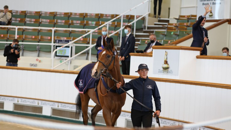 Swindler takes his turn in the Tattersalls ring