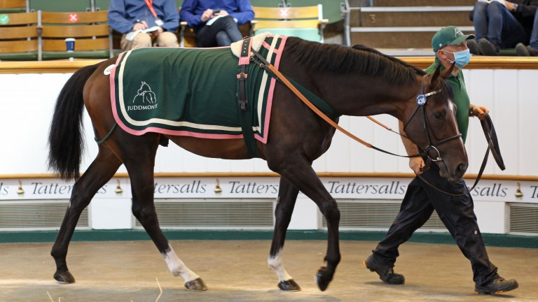 Georgeville takes his turn in the ring before being knocked down to David Spratt for 75,000gns