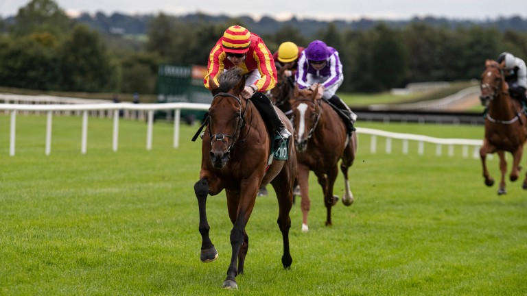 Galileo Chrome: just 7-1 to win the St Leger at Doncaster following ante-post support