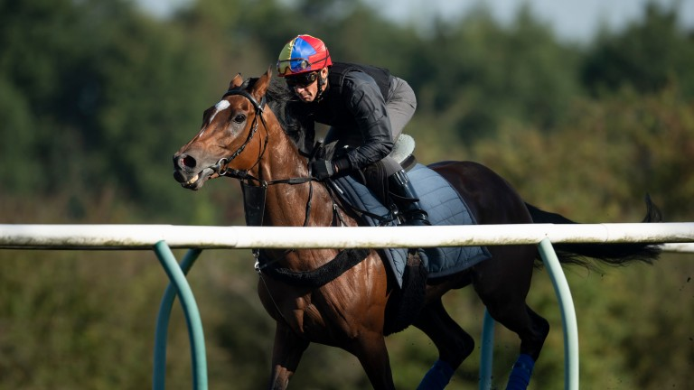 Enable: will be put through her paces on Warren Hill in the virtual Henry Cecil open weekend