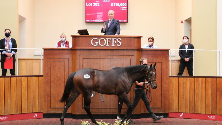 Lot 303: the Havana Gold colt bought by Oliver St Lawrence for £115,000