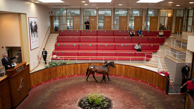 The scene in the socially distanced Goffs UK sales ring in Doncaster